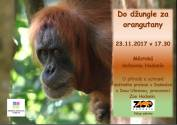 foto - Do džungle za orangutany